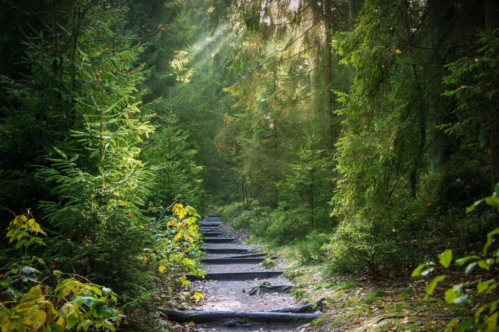 forest, away, forest path